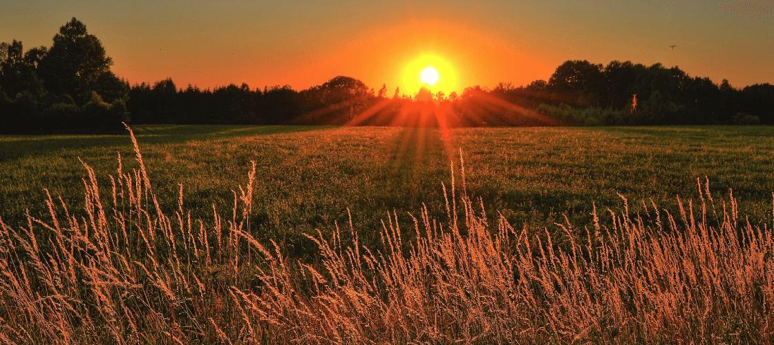 Entenda o que é energia rural e quais são suas regras